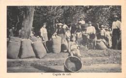 Costa Rica / 25 - Cogida De Café - Costa Rica