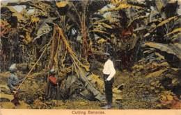 Costa Rica / 35 - Cutting Bananas - Costa Rica
