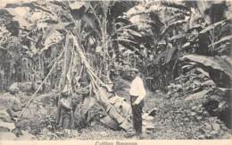 Costa Rica / 46 - Cutting Bananas - Costa Rica