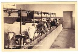 CPA - VIRTON - Institut Normal Agricole Ménager - Groupe De Vache à L'étable - Agriculture Elevage Animal Belge - Virton