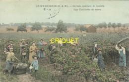 77 Grisy-Suisnas, Culture De Rosiers, Une Cueillette De Roses, Beau Plan, Carte Colorisée Affranchie 1905 - Autres Communes