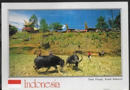 INDONESIA - TANA TORAJA, SOUTH SULAWESI - FORMATO GRANDE 17X12 - VIAGGIATA 1991 FRANCOBOLLO ASPORTATO - Indonesia