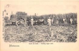 Cuba - Other / 21 - Matanzas - Cutting Sugar Cane - Cuba