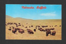 ANIMAUX - ANIMALS - THOUSANDS OF BUFFALOES ONCE RANGED OVER THE NEBRASKA PLAINS - BUFFALOS - PHOTO OTTO DONE - Animaux & Faune