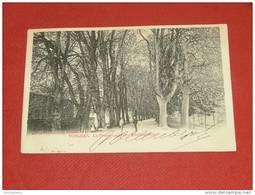TONGEREN - TONGRES -    La Promenade Des Marronniers   -  1902 - Tongeren