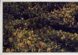 Colwccao - Memoria Da L Iha Das Flores - Acores - Formato Grande Viaggiata – E 9 - Cartoline