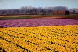 Holland - 502 - Formato Grande Viaggiata – E 9 - Cartoline