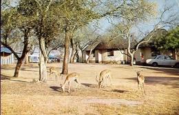 Skukuzaruskamp - Skukuza Rest Camp - Formato Grande Viaggiata – E 9 - Cartoline