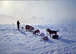 Svalbard - Hundekobbel Med Forer Over Innlandsisen - Norway - Formato Grande Viaggiata Mancante Di Affrancatura – E 9 - Cartoline