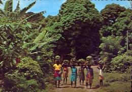 The Tropical Caribbean - Bananas On The Way To Market - Formato Grande Viaggiata Mancante Di Affrancatura – E 9 - Cartoline