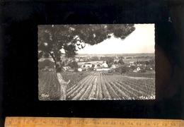 VIRE EN MACONNAIS Saône Et Loire 71 : Vue Générale Du Village Au Milieu Des Vignes 1953 - Other Municipalities