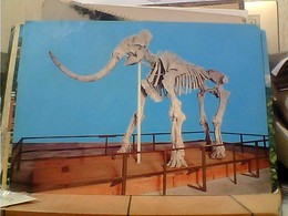 L'AQUILA MUSEO IL MAMMUT VB1972 GZ7010 - L'Aquila