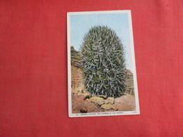 Barrel  Cactus         Ref 3115 - Cactus
