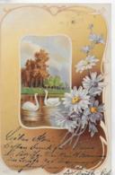 AK 0116  Schwäne , Margeriten - Gruss-Karte Um 1903 - Blumen