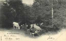 Au Bord Du Ruisseau Vaches Au Paturage Et  à L'abreuvage Precurseur - France