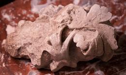 Sculpture Gothique Représentant Une Feuille De Vigne - XIII ème S. - Reims - Archéologie