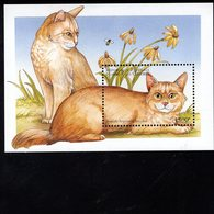 693363334 COMORO ISLANDS POSTFRIS MINT NEVER HINGED POSTFRISCH EINWANDFREI SCOTT 826 CHOCOLATE PERSIAN CATS - Comores (1975-...)