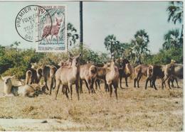 Congo Carte Maximum  Animaux 1965 Antilope 162 - Congo - Brazzaville