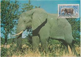 Congo Carte Maximum  Animaux 1965 Eléphant 163 - Congo - Brazzaville