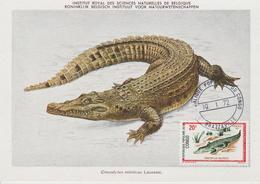 Congo Carte Maximum  Animaux 1971 Crocodile 292 - Congo - Brazzaville