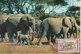 Congo Carte Maximum  Animaux 1972 Eléphant 319 - Congo - Brazzaville