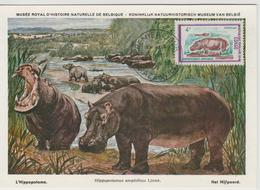 Congo Carte Maximum  Animaux 1972 Hippopotame 321 - Congo - Brazzaville