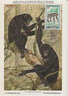 Congo Carte Maximum  Animaux 1972 Chimpanzé 325 - Congo - Brazzaville