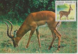 Congo Carte Maximum  Animaux 1976 Antilope 417 - Congo - Brazzaville
