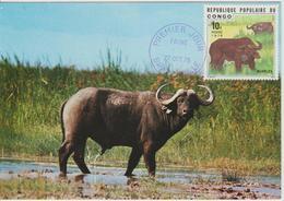 Congo Carte Maximum  Animaux 1976 Buffles 418 - Congo - Brazzaville