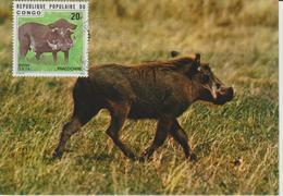 Congo Carte Maximum  Animaux 1976 Phacochère 420 - Congo - Brazzaville
