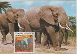 Congo Carte Maximum  Animaux 1976 Eléphants 421 - Congo - Brazzaville