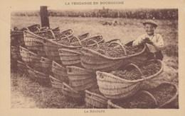 La Vendange En Bourgogne - La Récolte - Vignes