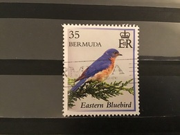 Bermuda - Vogelbescherming (35) 2014 - Bermuda