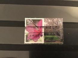 Bermuda - Bloemen (50) 2015 - Bermuda