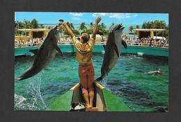 ANIMAUX - ANIMALS - 2 PORPOISES ( DAUPHINS ) JUMP FOR FISH AT FABULOUS SEAQUARIUM MIAMI FLORIDA - PHOTO LARRY WITT - Dauphins