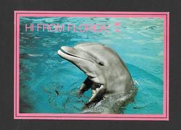 ANIMAUX - ANIMALS -  FLORIDA PORPOISES ( DAUPHINS ) INTELLIGENT MAMMALS POPULAR PERFORMERS SEAQUARIUM MIAMI FLORIDA - Dauphins