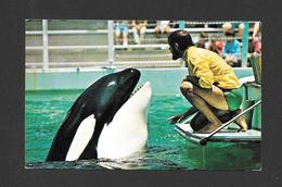 ANIMAUX - ANIMALS -  WHALES WHALE ÉPAULARS HUGO TALKS TO HIS TRAINER AT SEAQUARIUM MIAMI FLORIDA - Animaux & Faune