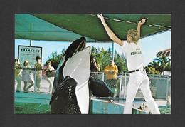 ANIMAUX - ANIMALS - KILLER  WHALES WHALE ÉPAULARS HUGO TALKS TO HIS TRAINER AT SEAQUARIUM MIAMI FLORIDA - Animaux & Faune