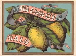 """D8965 """"SCIROPPO - ACQUA DI TUTTO CEDRO DI SALO - FINE XIX SECOLO  """".  ETICHETTA ORIGINALE - Frutta E Verdura"""