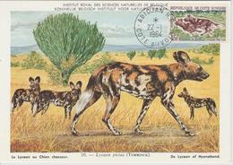 Cote D'Ivoire Carte Maximum 1964 Lycaon 219 - Ivory Coast (1960-...)