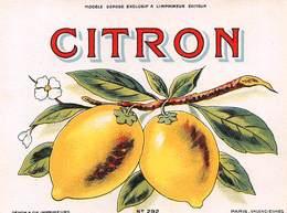 """D8966 """"SCIROPPO - CITRON - ANNO 1930  """".  ETICHETTA ORIGINALE - Frutta E Verdura"""