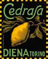"""D8968 """"SCIROPPO - CEDRASA - DIENA TORINO - ANNO 1920  """".  ETICHETTA ORIGINALE - Frutta E Verdura"""