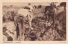 L'Héritier Guyot - Le Labour - Vignes