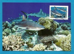 Australien / Cocos (Keeling) Islands  2005  Mi.Nr. 421 , Grey Reef Shark - WWF Maximum Card - 21 June 2005 - Cocos (Keeling) Islands