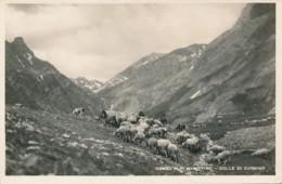V.262.  ORMEA - Cuneo - Colle Di Carnino - Italie