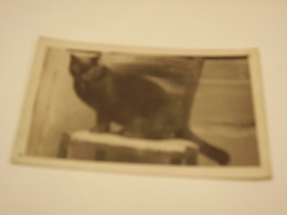 MONTPELLIER FERNAND NICOLET GRAVURE - Cartes Postales