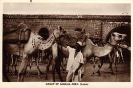 ARABIE SAOUDITE - ADEN - GROUP OF CAMELS - Arabie Saoudite