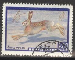 Sowjetunion 2323 O Hase - 1923-1991 UdSSR