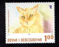 693933928  BOSNIAK MUSLIM GOVERNMENT POSTFRIS MINT NEVER HINGED POSTFRISCH EINWANDFREI SCOTT 578 DOMESTIC CAT - Bosnie-Herzegovine