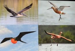 BIRDS,  MINT POSTAL STATIONERY, PREPAID POSTCARDS, FLAMINGO, PARROTS, FRIGATE BIRDS, PELICANS - Flamingo